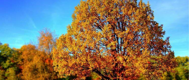 Menus sin gluten para el otoño
